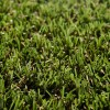 Lush Lawns Spring